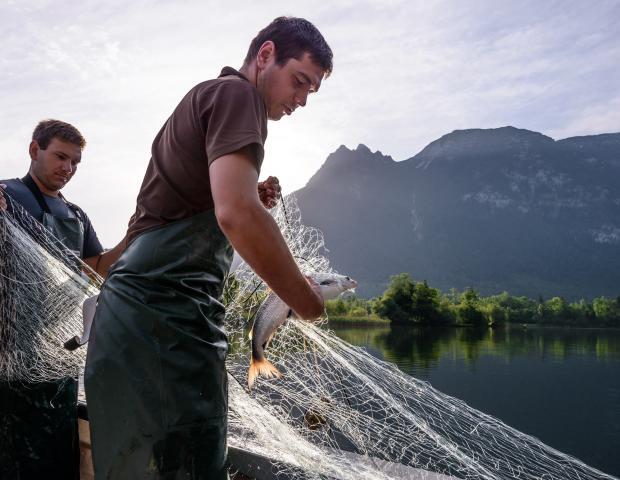 Lieferant für Genuss am See: Fischerei Ausseerland